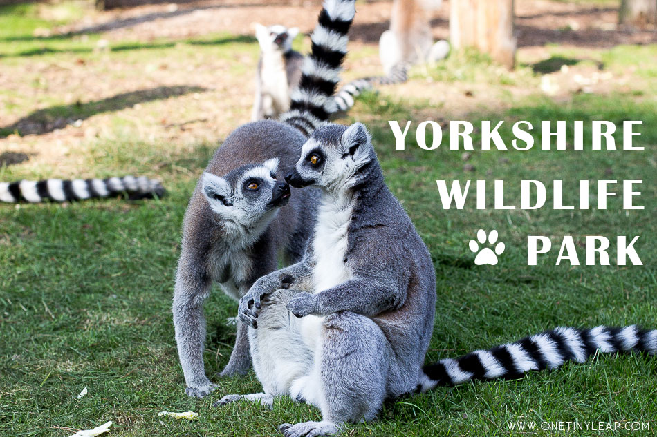 Yorkshire Wildlife Park - Days Out With Kids
