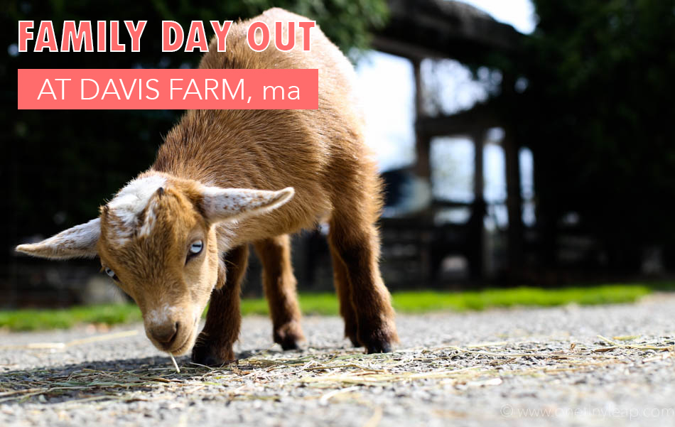 davis farm massachussets via @onetinyleap