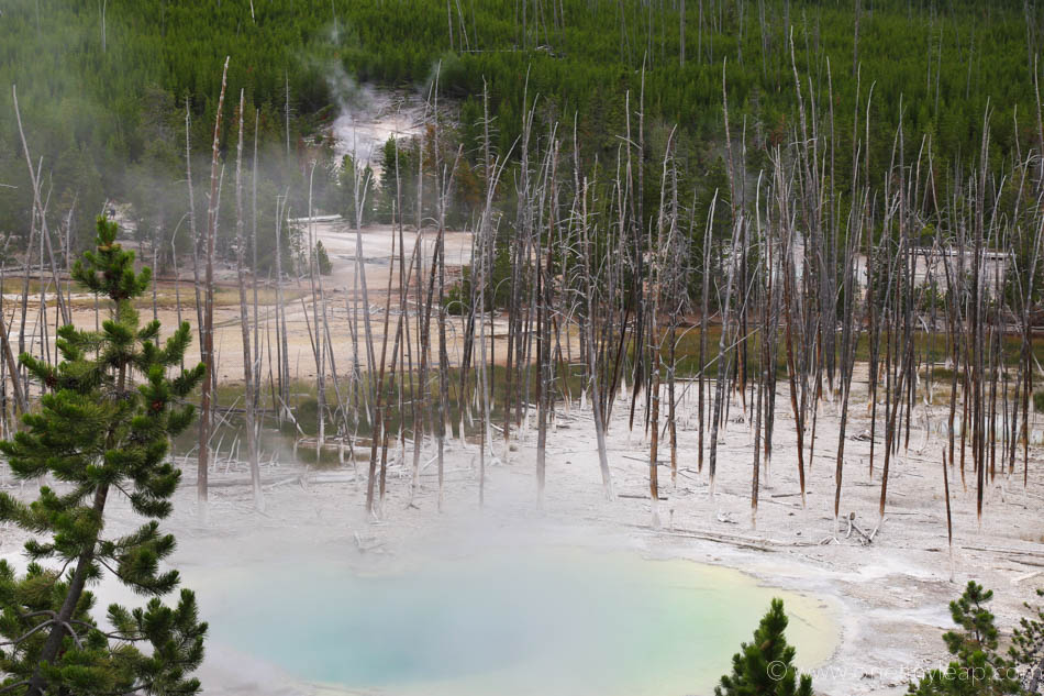 Cistern Spring at Yellowstone National Park // Copyright One Tiny Leap