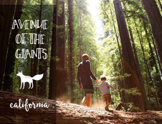 avenue of the giants via @onetinyleap