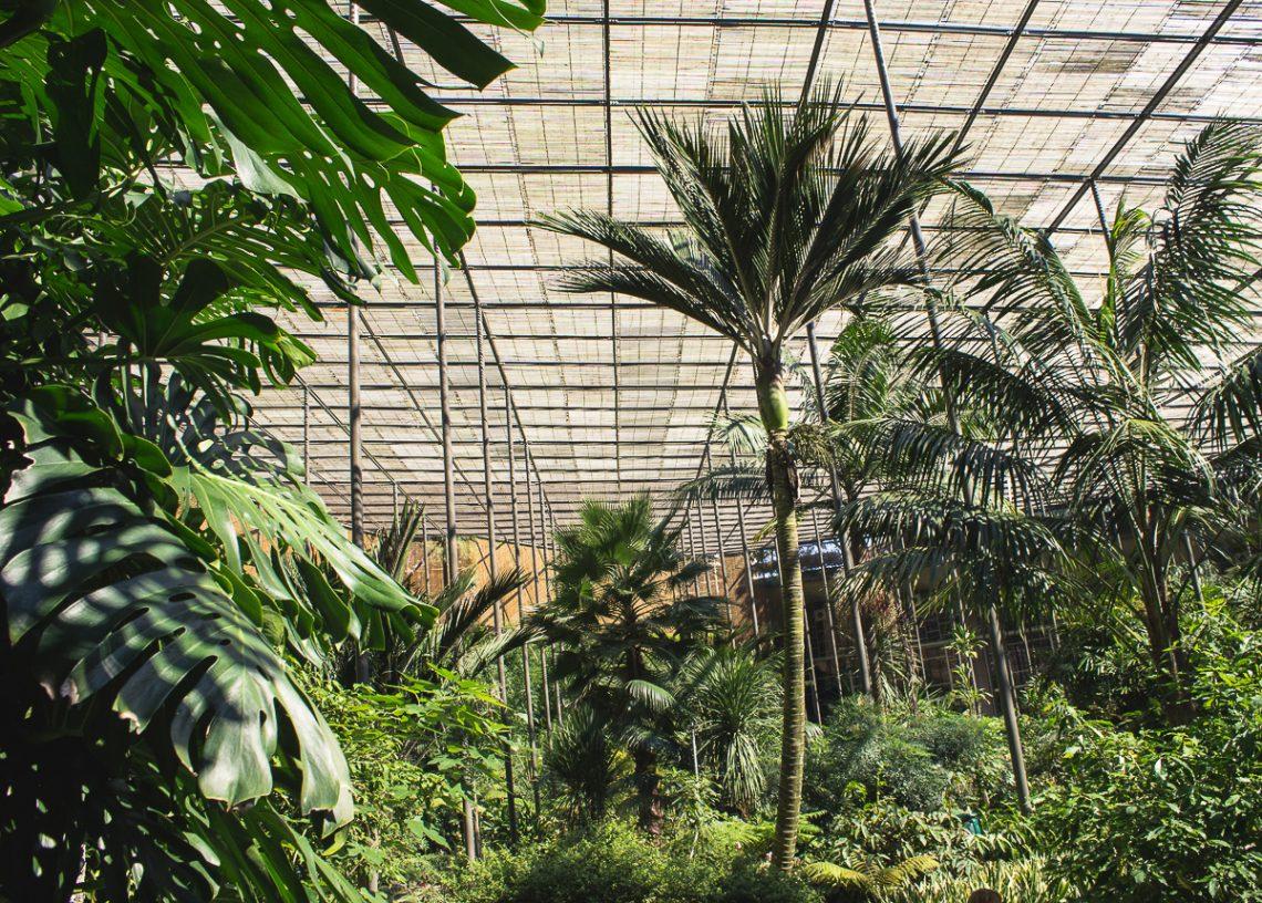 Estufa Fria / Lisbon Greenhouse