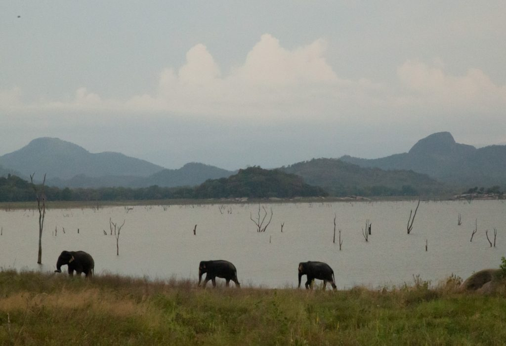 Gal Oya Lodge wildlife